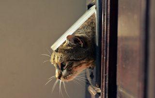 Brown Cat Peeping Our Of Pet Door