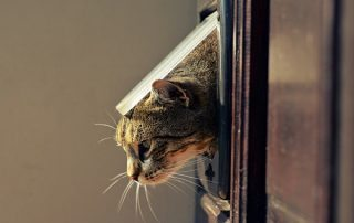 Brown Cat Peeping Our Of Pet Door